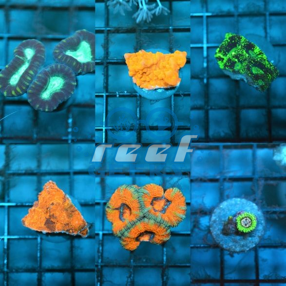 Ultra Mixed Frag Pack